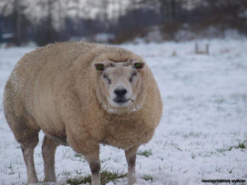 ooi in sneeuw 7  dec  2012